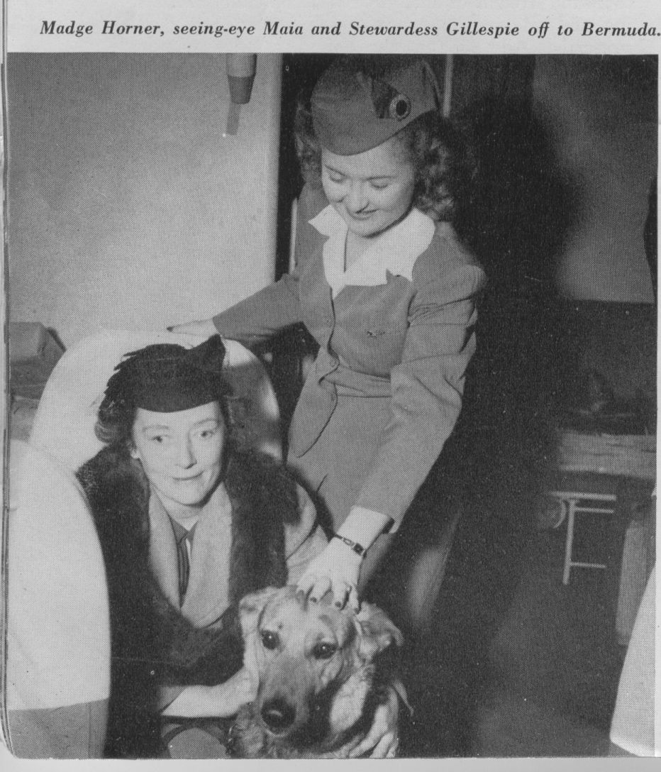 1947 Stewardess  assisting a customer with her seeing eye dog.