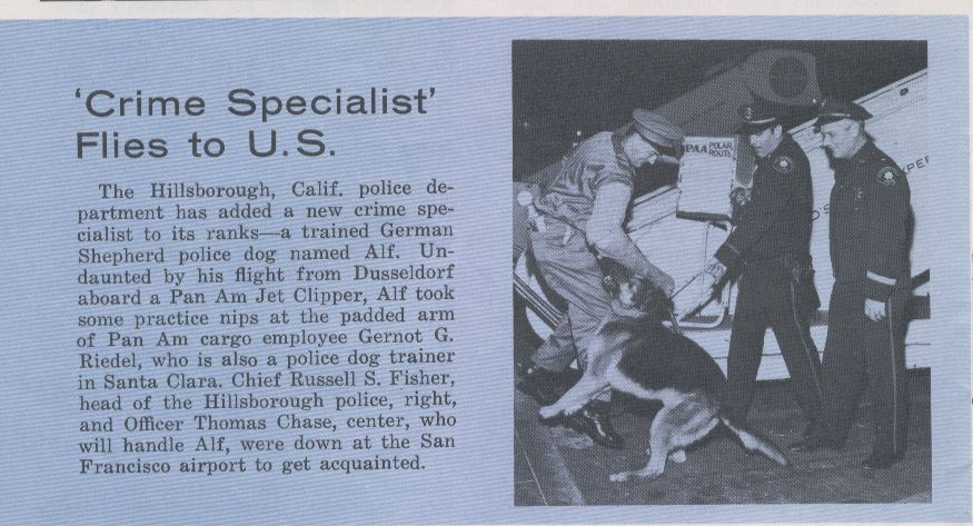 1960s  A police dog flies Pan Am